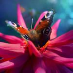 Heart Of Butterfly