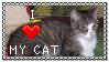I love my cat by Rej-kun