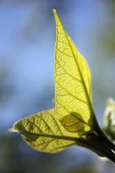 Greeniness by SprayCaint123