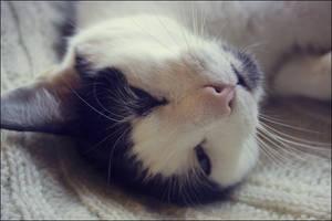 sleepy by joannastar