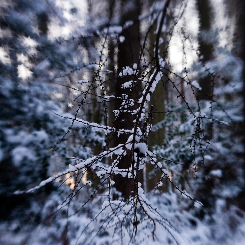 frozen stars: delicate twigs by joannastar