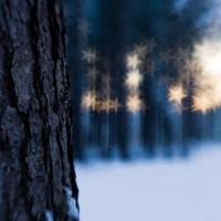frozen stars: blue bark by joannastar