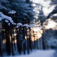 frozen stars: snow at sunset by joannastar