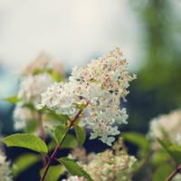 swarm like little butterflies by joannastar