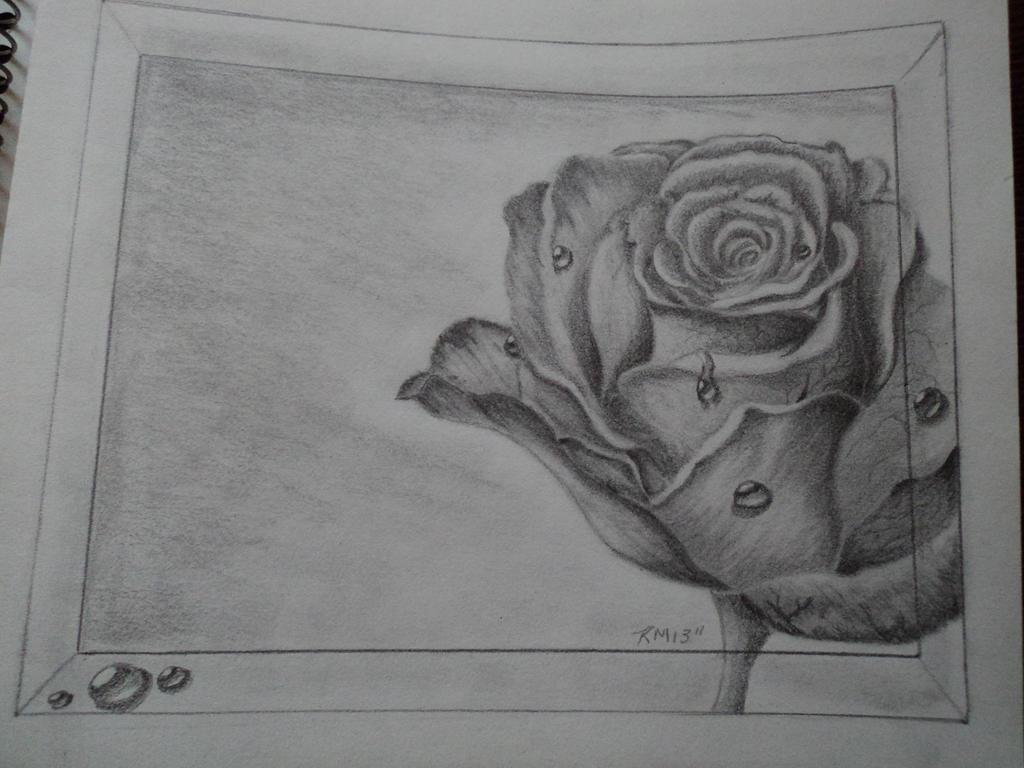 Rose water drop by Tim...