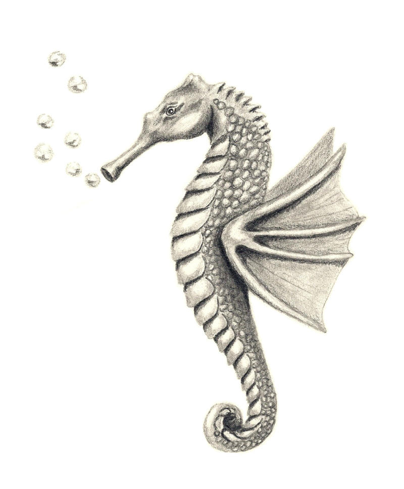 Seahorse by aissyla on deviantart for How to draw a simple seahorse