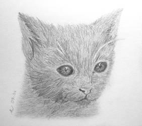 Kitten by Aissyla