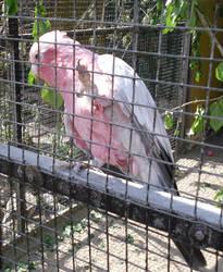 In Captive