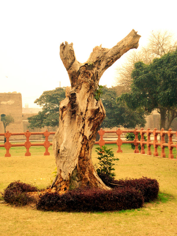 Tree in Punishment by AssamART