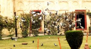 sudden flies by AssamART