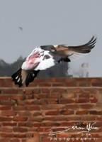 First Fly by AssamART