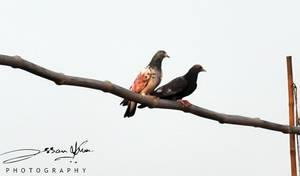 loving Couple by AssamART