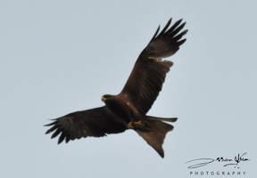 Full Flight by AssamART