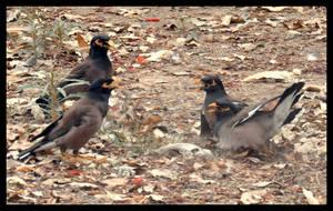 Bird DisCusion by AssamART