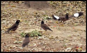 Birds Fighting by AssamART