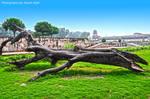 TREE by AssamART