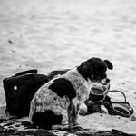Loyal Dog