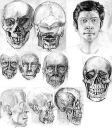 Head Studies