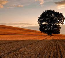 We Stand Alone by Autumniece