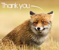 Kitsune Thank You Reaction by Reincarnators