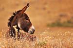 Donkey by itan14