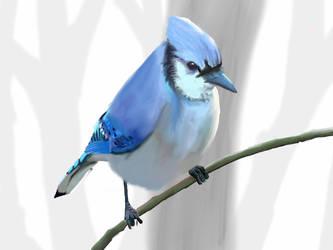 Blue jay by Colvindavid