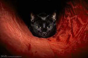 Loki by ShiftonePhotography