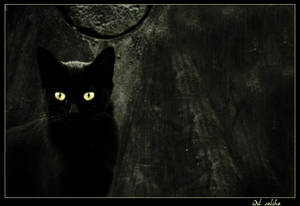 black by idilsalihakuntuz