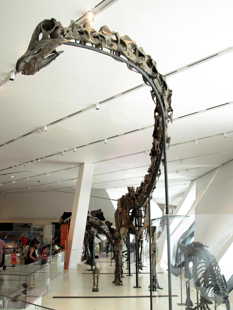 Barosaurus lentus by KMourzenko