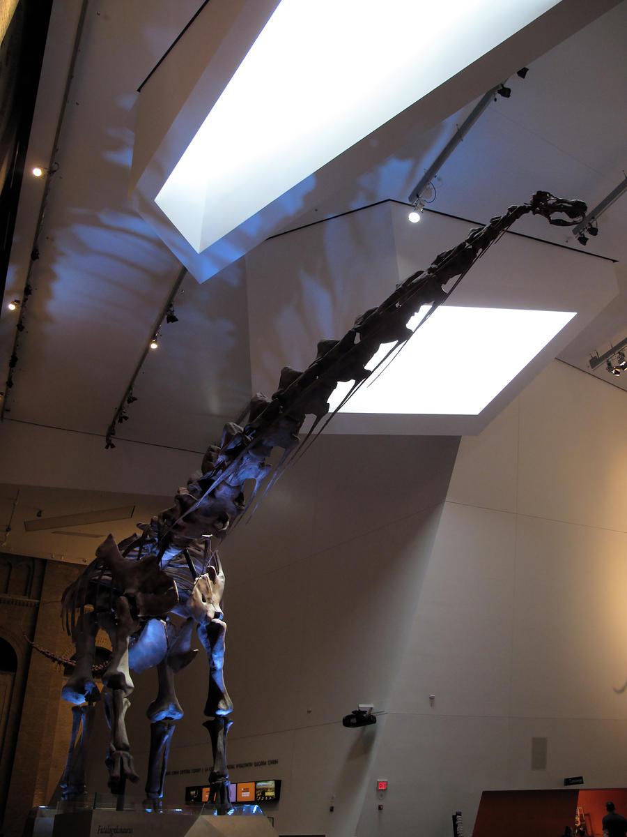 Futalognkosaurus by KMourzenko