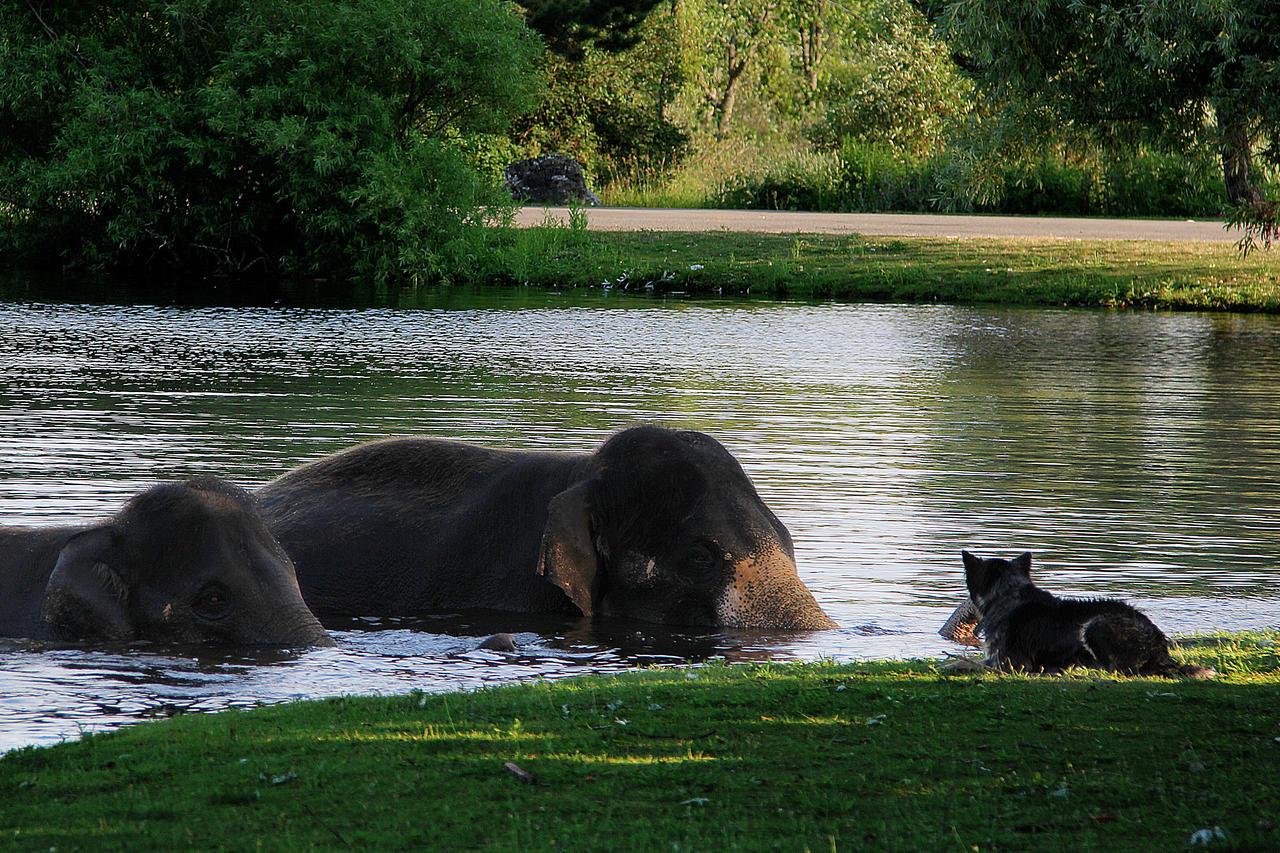 Asian Elephants Taking a Bath by KMourzenko