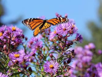 Butterfly Coming in for a Landing by KMourzenko