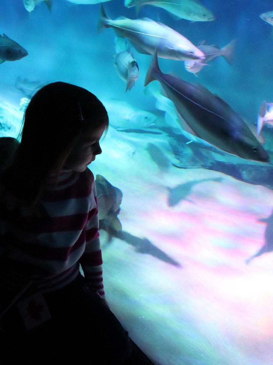 Yara At Ripley's Aquarium by KMourzenko
