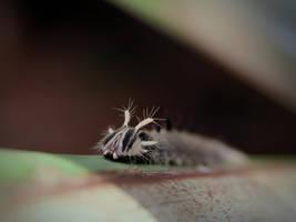 Owl Butterfly Caterpillar by KMourzenko