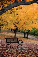Autumn and Bench by KMourzenko