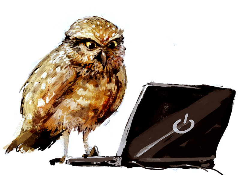 Owl by Morriperkele