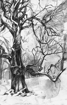 Nadia's tree