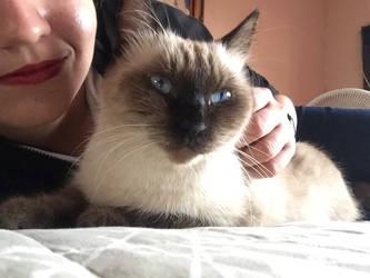My cat by BakGuiy