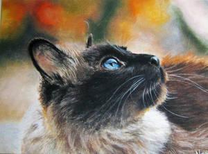 Cat by the window by JackieBricks