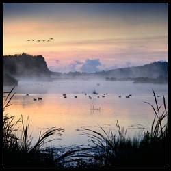 Birds in mist