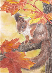 Squirrel in a Maple Tree