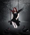 Lake of black swans