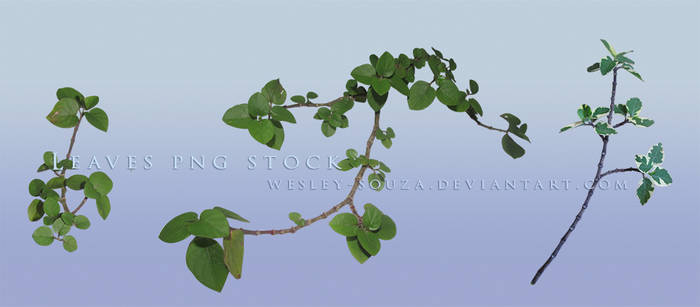Leaves PNG Stock 3