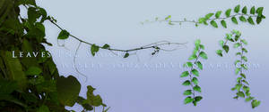 Leaves PNG Stock 4