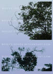 Trees with Branches PNG Stock