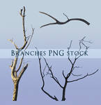 Branches PNG stock 2