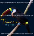 Toucan PNG Stock