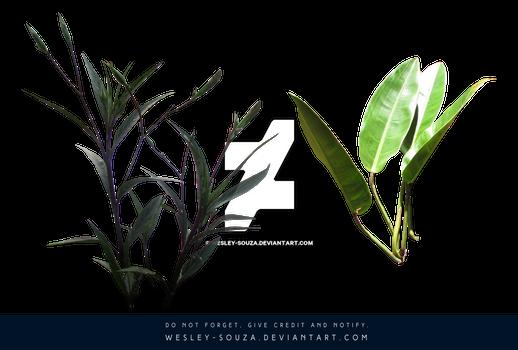 2 plants PNG