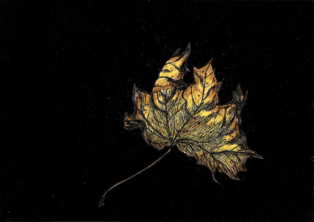 Lonely leaf by ObviouslyCumbersome