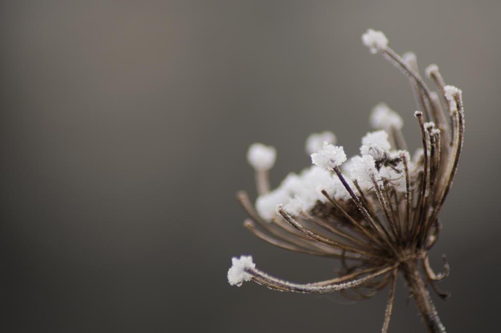 Winter by bethstenhouse